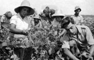 Kibbutz Gan Shmuel, 1940's (photo: Gan Shmuel archive)